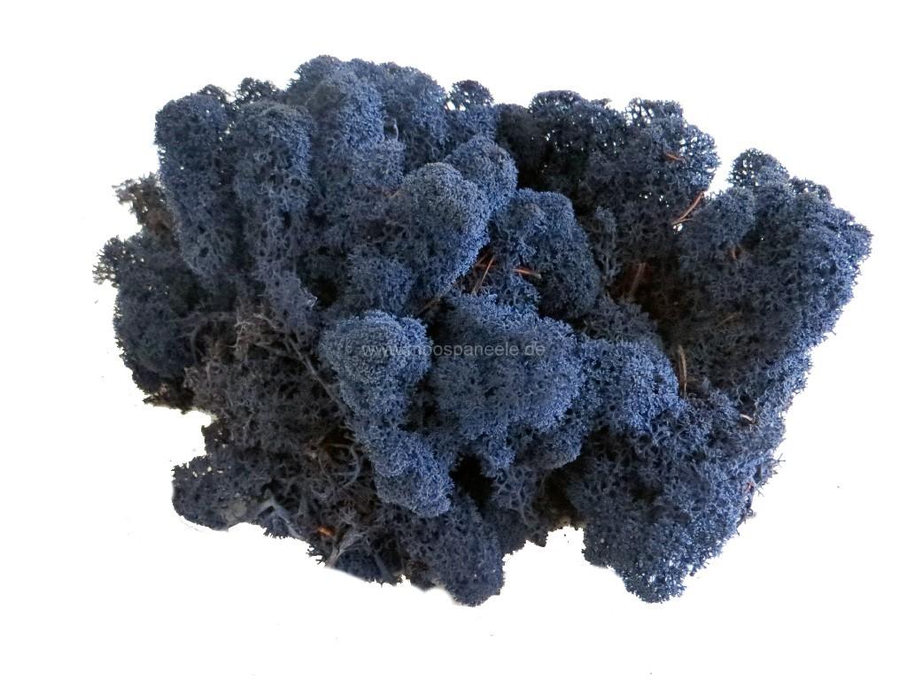 Islandmoos auch  Rentiermoos genannt in der Farbe - Blau