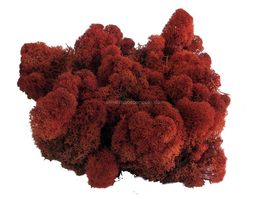 Islandmoos beziehungsweise Rentiermoos in der Farbe - Crimson