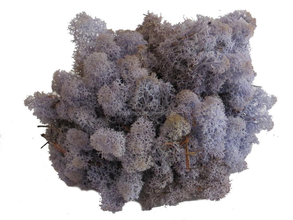 Rentiermoos für eine Wandgestaltung in der Farbe Lavendel