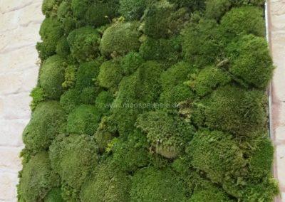 Moosbilder - Bollmoos - Alu - Moosgrün