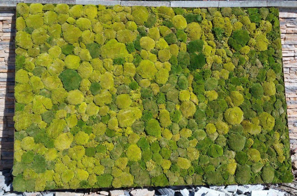 Moosbilder - Bollmoos - Mix - Natur und Moosgrün