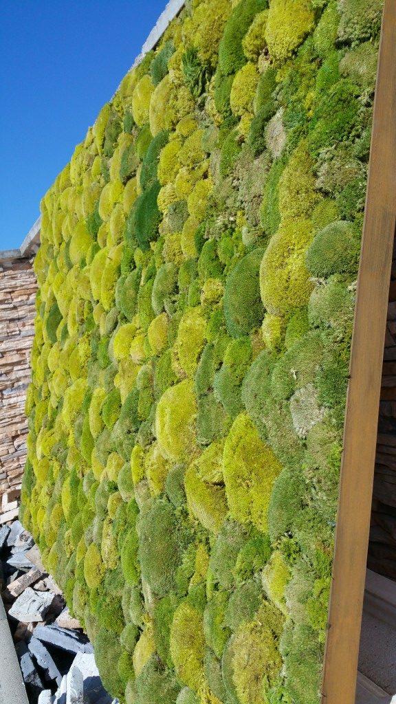 Moosbild mit Bollmoos in den Farben moosgrün und Natur in einem Alurahmen Glasperl gestrahlt