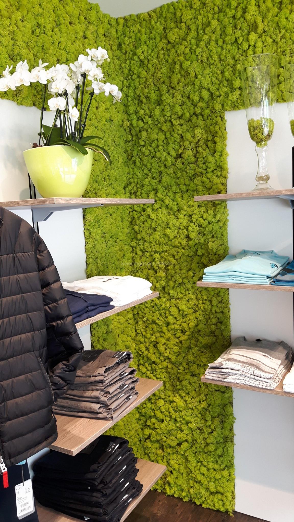 Mooswände mit Islandmoos in der Farbe Frühlingsgrün in einem Bekleidungsgeschäft in Bad Zwischenahn