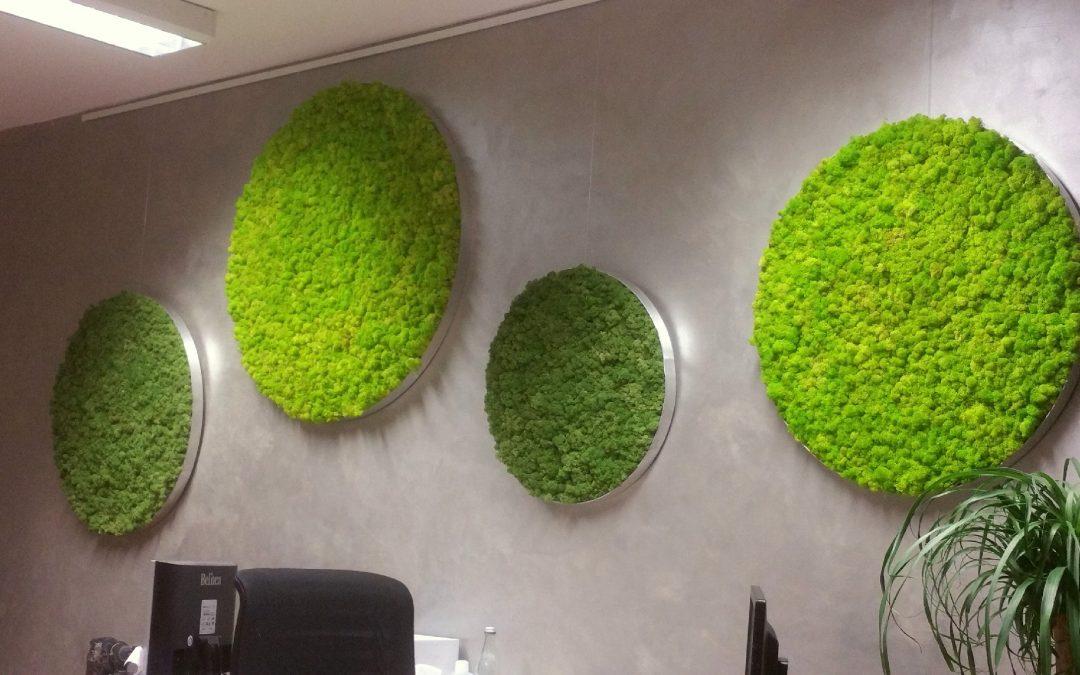 Runde Moosbilder für die Wandgestaltung im Büro