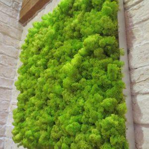 Moosbilder - Alurahmen Eckig - Islandmoos Frühlingsgrün