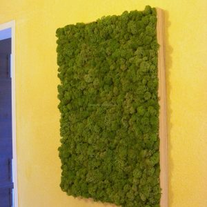 Moosbild - Islandmoos - Mittelgrün - Holzrahmen