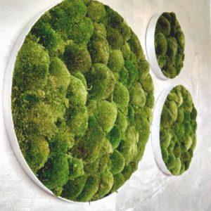 Runde Moosbilder - Alurahmen - Bollmoos Waldgrün