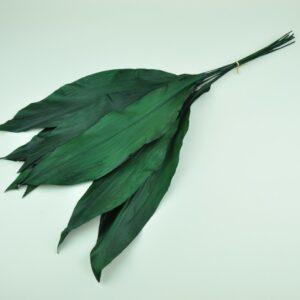 Stabilisierte Pflanzen - Blätter - Aspidistra - Grün