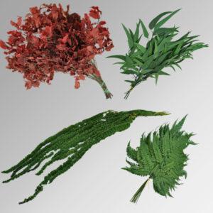 Stabilisierte Pflanzen