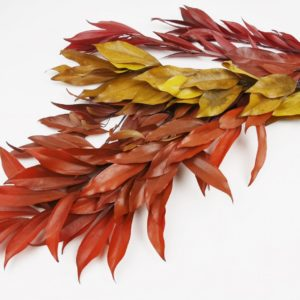 Stabilisierte Scheimyrte Cocculus - Zweige - Herbstfarben