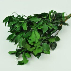 Stabilisierte Pflanzen - Zweige - Hedera Efeu Grün