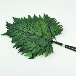 Stabilisierter Lederfarn Grün